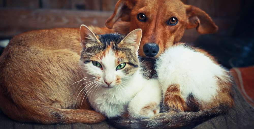 cat and dog Florida Pet Trusts